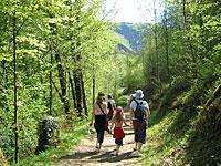Wandern Bayerischer Wald